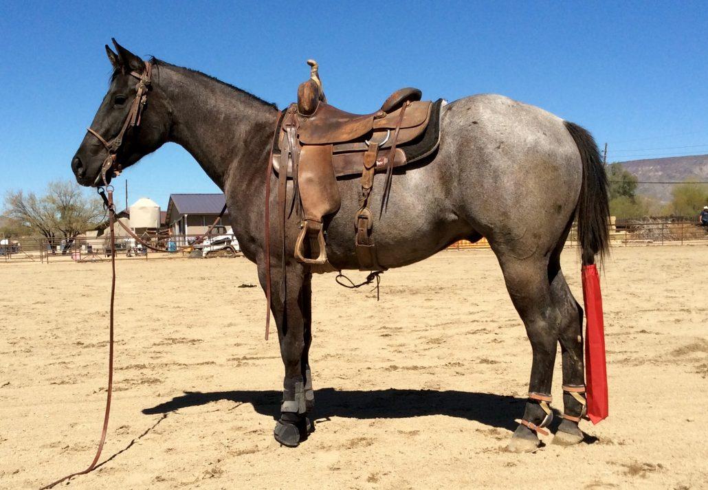 Blue Roan Mule T
