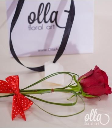 micul-gigant-trandafir-din-ecuador