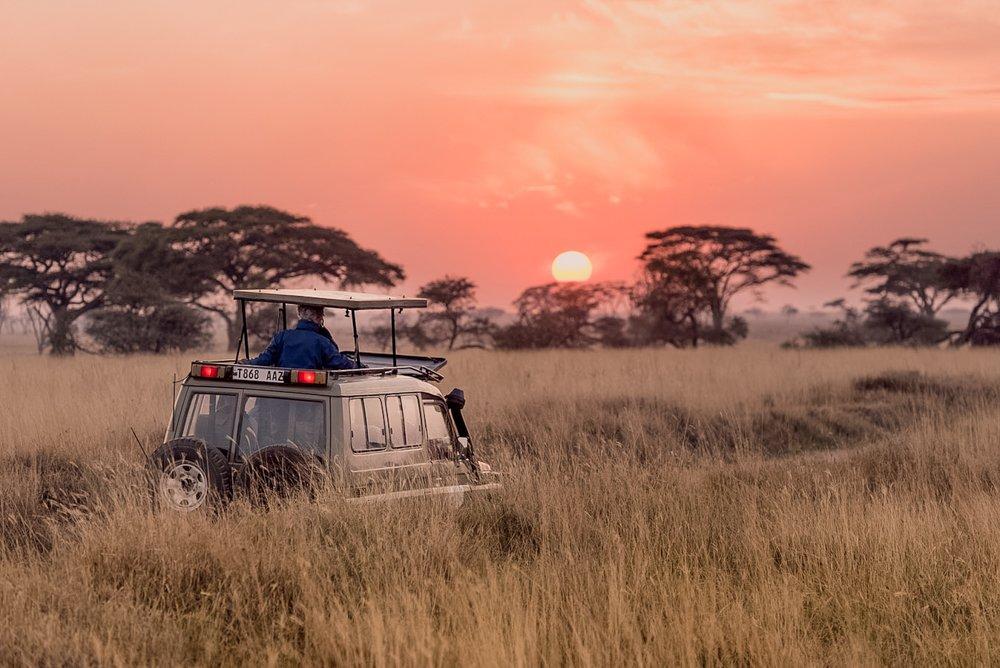 African Safari Photo Gear: a Beginners Guide