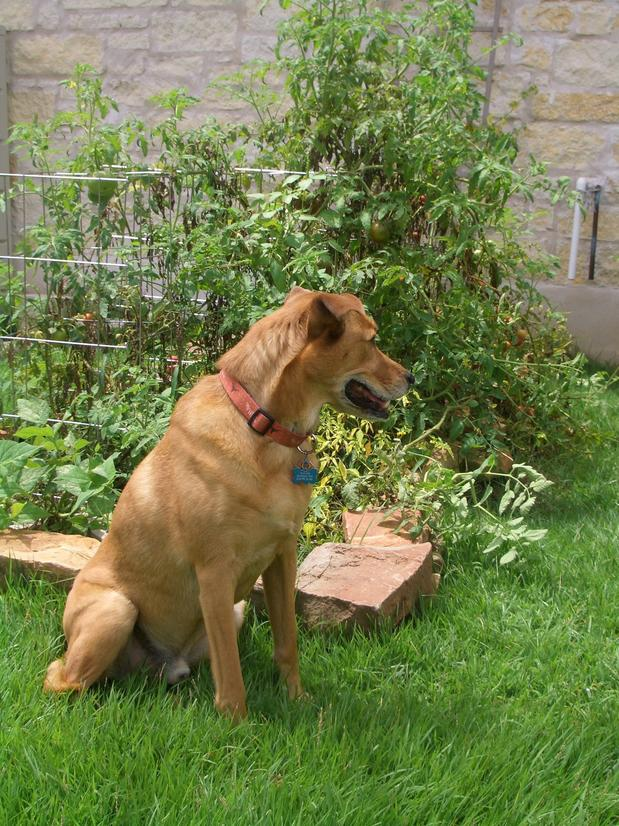 Image result for pets out in the garden