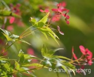 © diana westberg, http://dianawestberg.wordpress.com/, http://www.onlythismoment.com, nature photography, intuitive photographer, one spin an odyssey into the moment, dian westberg art director, art director, © diana westberg photographer