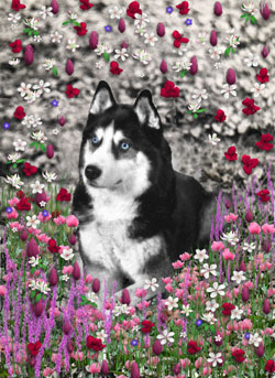 Irie in Flowers