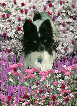Matisse in Flowers