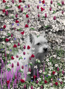 Violet in Flowers