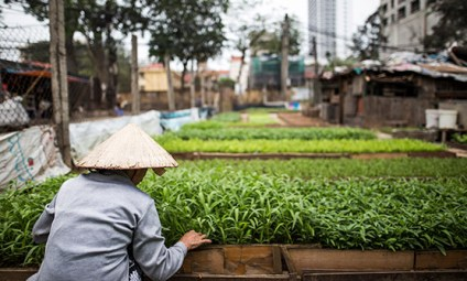 May 2017 - Inner city farming in Hanoi