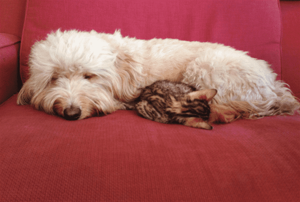 dog-and-cat-snuggling-on-couch