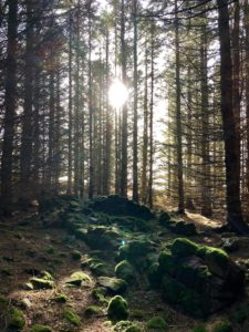 Scotland Revisited: Image of a forest in Scotland.