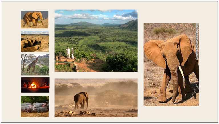 Safari de Diani Mombasa à Diani Mombasa Tsavo Amboseli
