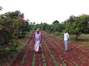 A farmer who will lose his farmland, which includes mango orchard