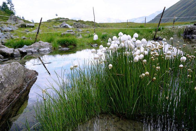 biotopo Purschtal