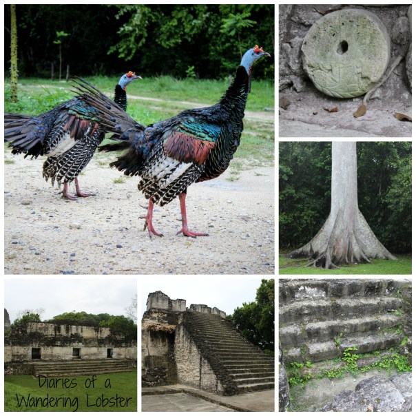 Some colorful turkeys, a Ceiba tree, and scenes from the Grand Plaza