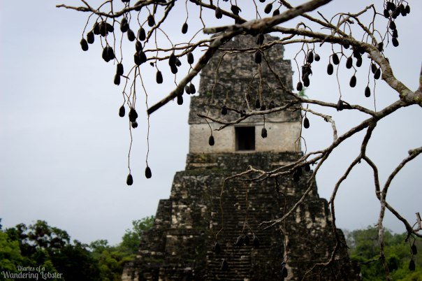 Temple I through the tree