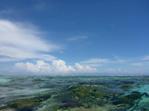 Caye Caulker Marine Reserve reef belize