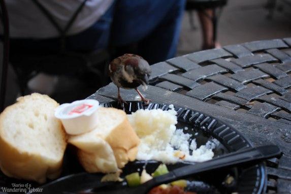A little birdie ate my grits
