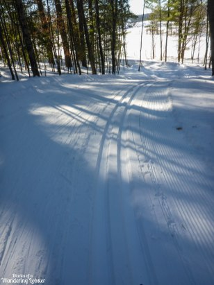 [img] cross-country skiing in Maine Pineland Farms XC Ski Trail