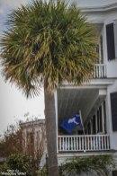 palmflag