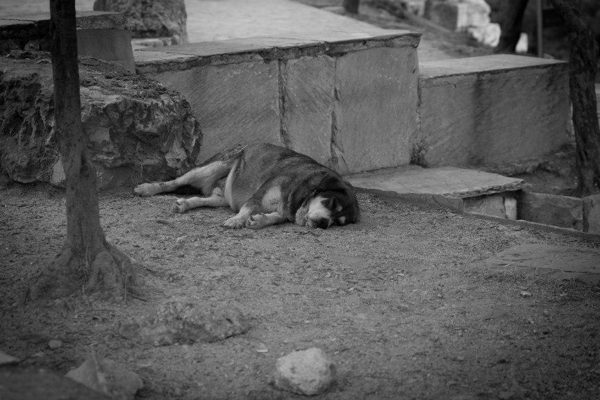homeless dog Acropolis