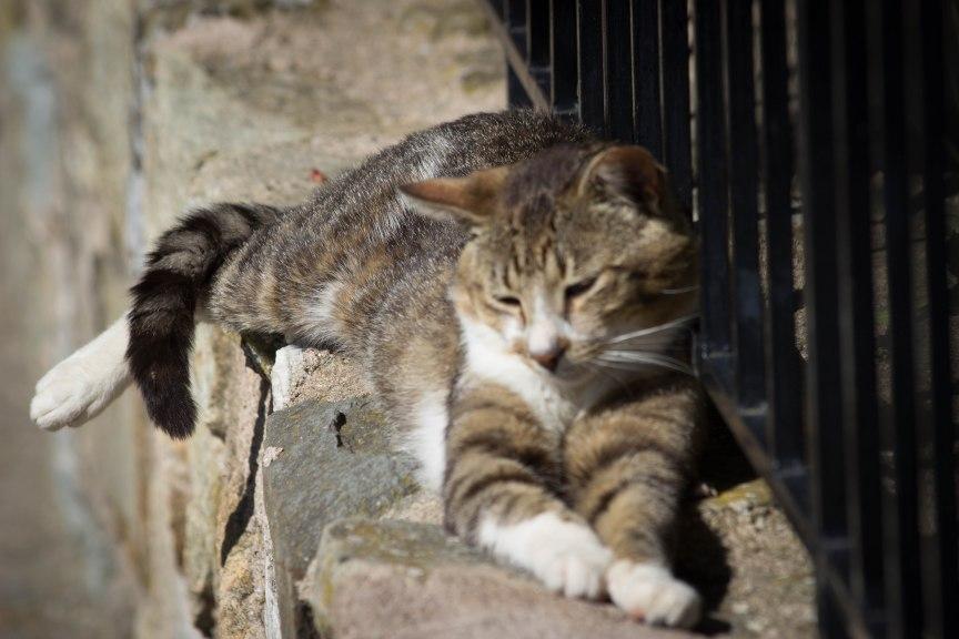 Meteora Greece cat