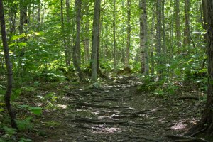 hiking southern maine