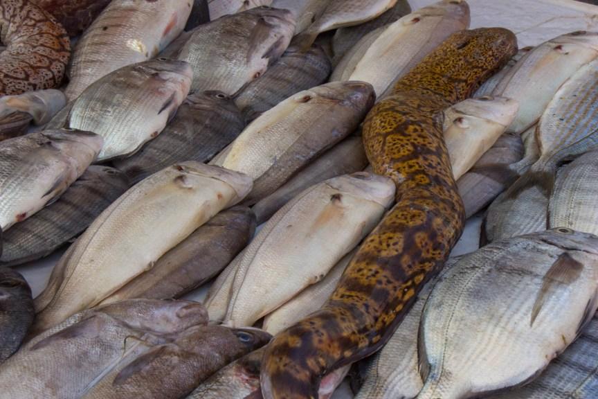 [img] essaouira fish market