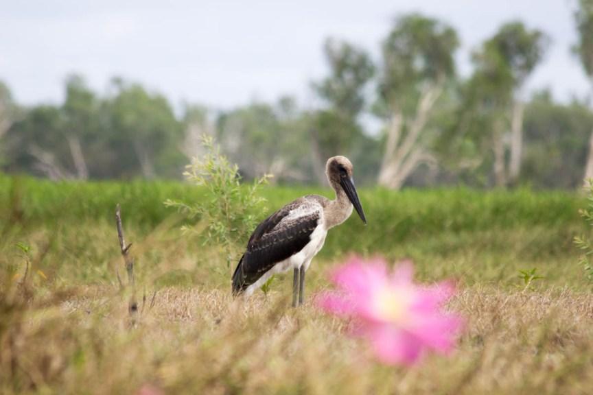 [img] Kakadu National Park Jabiru