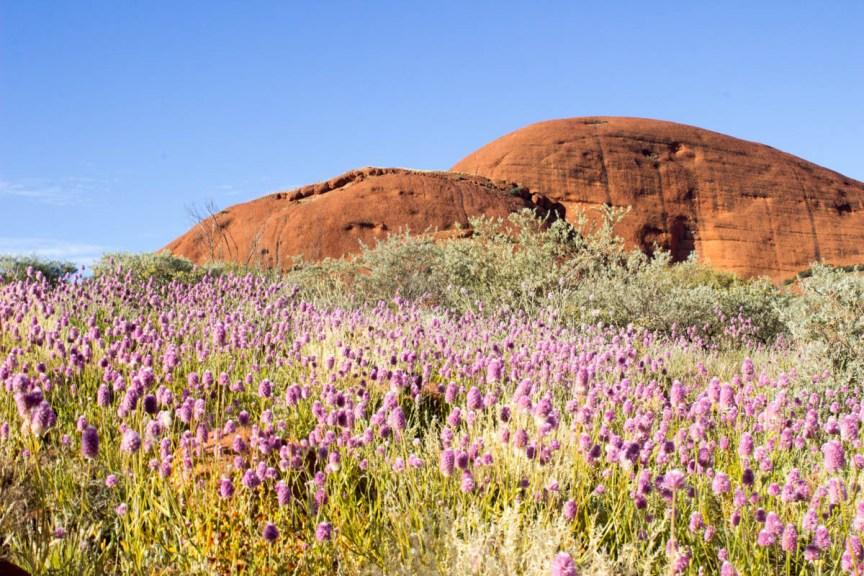 [img] visiting Uluru and Kings Canyon