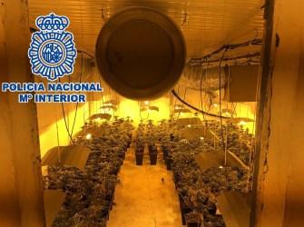 Entre los investigados existía un claro reparto de tareas en lo referente al cultivo, mantenimiento y vigilancia de la producción y su posterior venta.