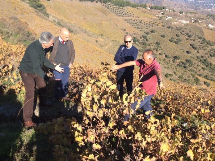 La Junta abona a 447 agricultores cerca de 360.000 euros en ayudas agroambientales a invernaderos y uva pasa