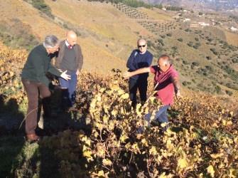 Agricultura muestra a expertos de la FAO las propiedades de la uva pasa moscatel para ser declarada patrimonio mundial
