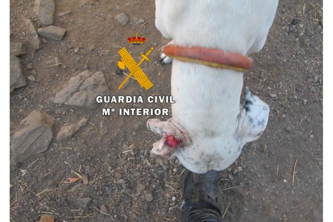 Uno de los canes tuvo que ser sacrificado por la grave situación en la que se encontraba.
