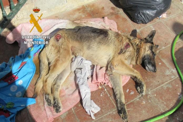 La Guardia Civil realiza tres actuaciones contra el maltrato animal en la Axarquía