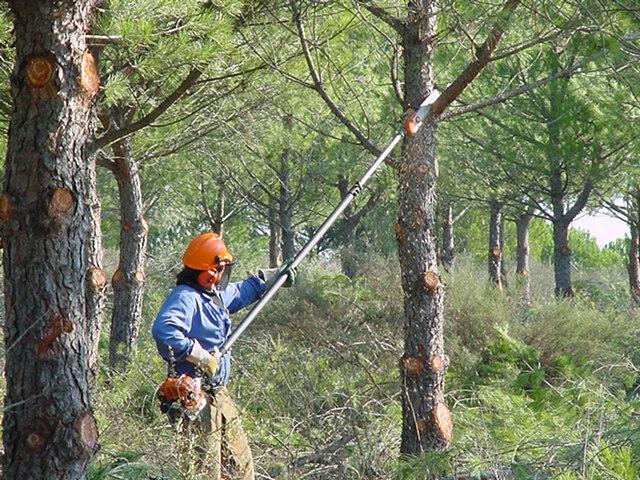 Medio Ambiente adjudica los trabajos forestales para prevenir incendios en montes públicos de 24 municipios andaluces