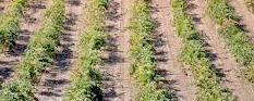 La renta agraria de 2017 aumentó un 5,5% respecto al ejercicio anterior, hasta superar los 9.726 millones de euros