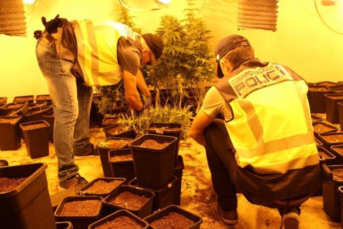 La Policía Nacional desmantela 11 cultivos indoor de marihuana con 2.217 plantas en la barriada de los Asperones de Málaga