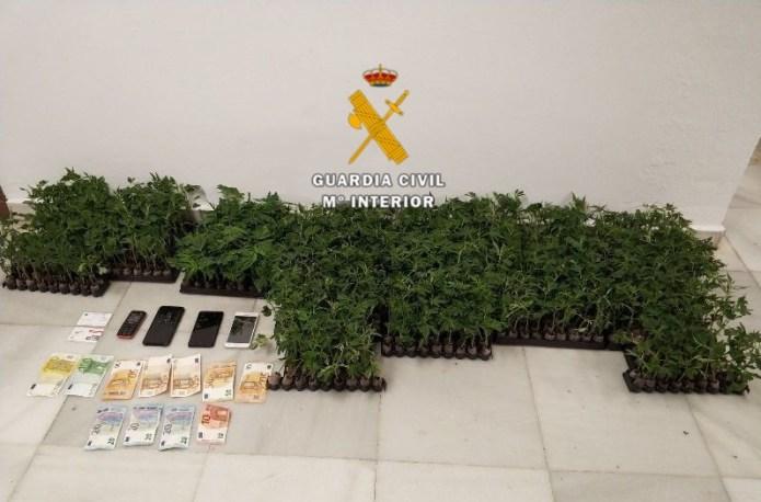 La Guardia Civil detiene a una persona e interviene 915 plantones de marihuana en Alhaurín de la Torre