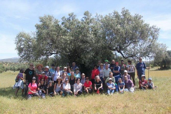 Instructivo y exitoso itinerario por un olivar del siglo XVIII