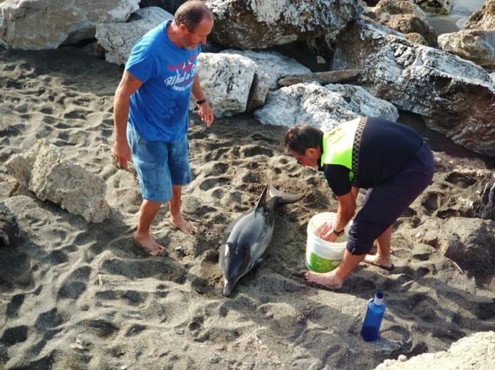 Rescatan un joven delfín en la playa de Chilches
