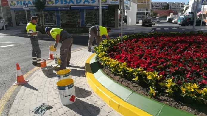 El área de Medio Ambiente decorará Vélez-Málaga con más de 10.800 pascueros esta Navidad