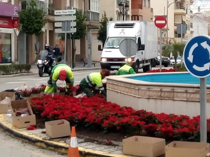 El Área de Medio Ambiente del Ayuntamiento de Vélez-Málaga está colocando pascueros en jardineras y rotondas del municipio.