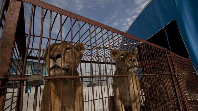 IU advierte al gobierno veleño de la necesidad de hacer valer los acuerdos plenarios para evitar la instalación de circos con animales en el municipio