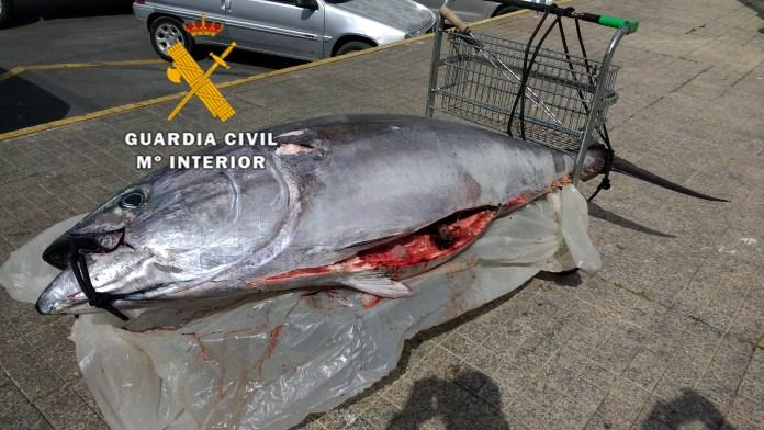La Guardia Civil interviene un atún rojo pescado ilegalmente comercializado en un mercado de Marbella