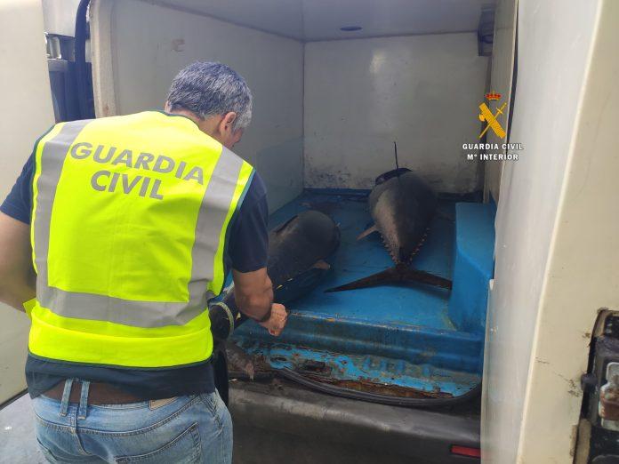 La Guardia Civil interviene en Marbella dos atunes rojos capturados ilegalmente