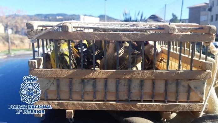 Agentes de la Unidad de Prevención y Reacción localizaron en el maletero del vehículo una jaula conteniendo 15 chamarices, cinco verdones y dos jilgueros; además, descubrieron útiles para la captura de las aves como redes y cordeles