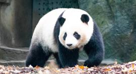 Panda exchange habilita webApp