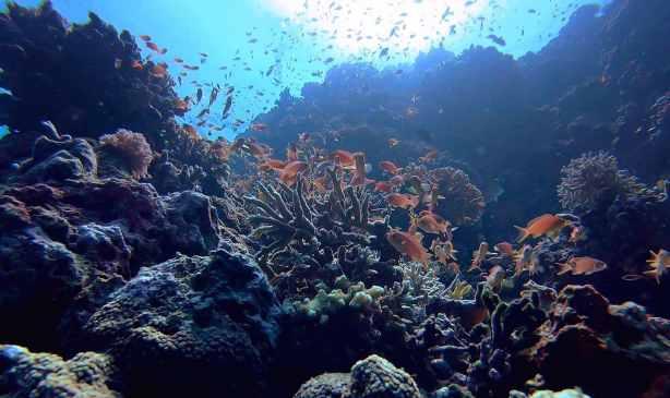 blockchain conservación marina