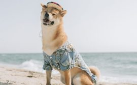 DogeDay-unsplash