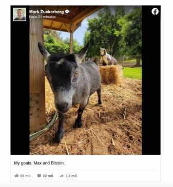 Zuckerberg cabra