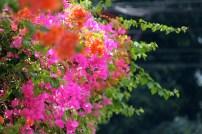 -Galeria Colores Verano 2 copy