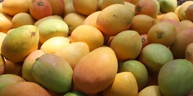 """ISTU prepara """"IV Festival del Mango"""""""