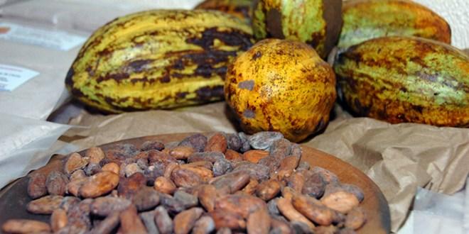 El Salvador participa en 2º seminario anual de Cacao en las Américas